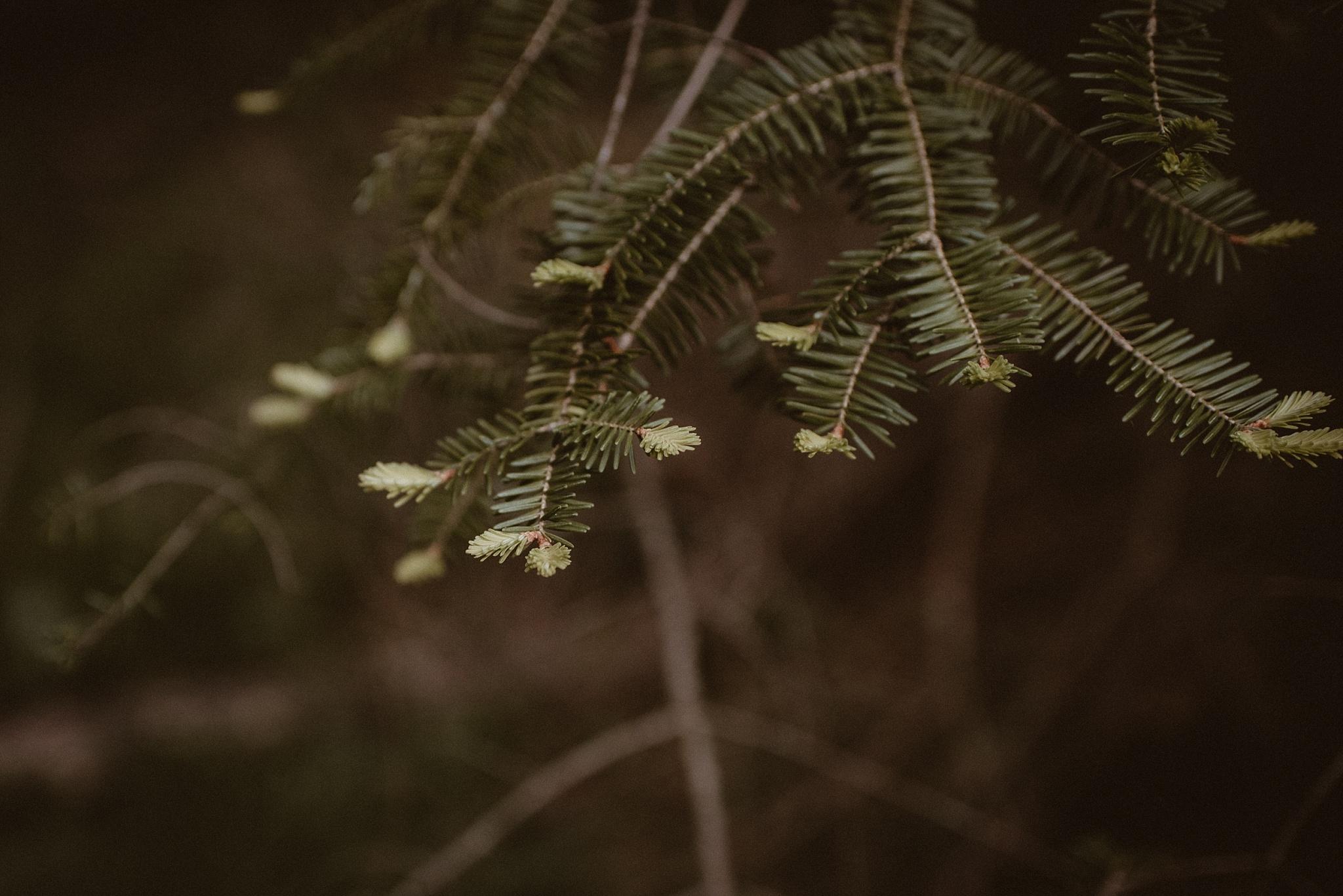 Northern-Michigan-Photographer,
